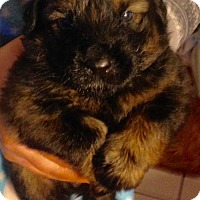 Adopt A Pet :: 11 PUPS - Jack - Colton, CA