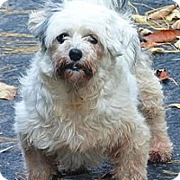 Adopt A Pet :: Cookie - Hop Bottom, PA