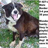 Adopt A Pet :: # 427-09 - ADOPTED! - Zanesville, OH