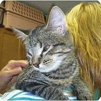 Adopt A Pet :: Luigi - Colmar, PA