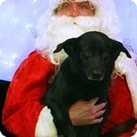 Adopt A Pet :: Hope - River Falls, WI