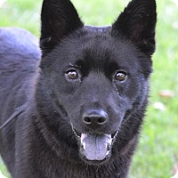 Adopt A Pet :: Josie - Enfield, CT