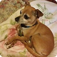 Adopt A Pet :: Buttons - Elkhart, IN