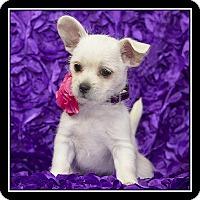 Adopt A Pet :: Candace - San Dimas, CA