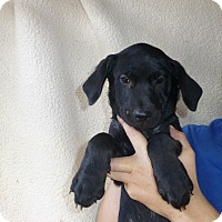 Adopt A Pet :: Paisley - Oviedo, FL