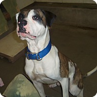 Adopt A Pet :: HARLEY - Medford, WI