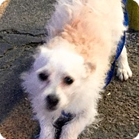Adopt A Pet :: Ham - Phoenix, AZ