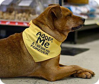 Shar Pei/Hound (Unknown Type) Mix Dog for adoption in Mebane, North Carolina - Pilgrim