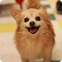 Adopt A Pet :: Sollers - Morganville, NJ
