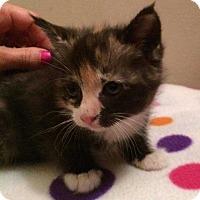 Adopt A Pet :: Sansa - Kennesaw, GA