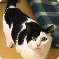 Adopt A Pet :: Beta - Hudson, NY