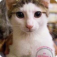 Adopt A Pet :: Fleur - Staten Island, NY