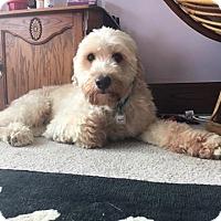 Adopt A Pet :: Chaucer - Mukwonago, WI