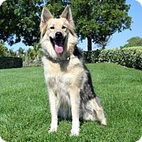 Adopt A Pet :: Whitney - San Diego, CA