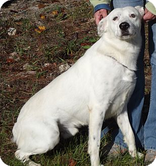 Blue Heeler/Cattle Dog Mix Dog for adoption in Cheboygan, Michigan - 20791