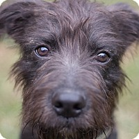 Adopt A Pet :: Bubby - Cincinnati, OH