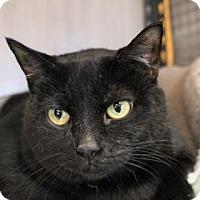 Adopt A Pet :: Eden - West Des Moines, IA