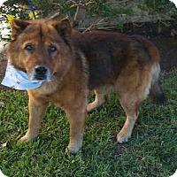 Adopt A Pet :: McKinley ID#A5019176 - Beverly Hills, CA
