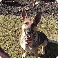 Adopt A Pet :: Greta (bonded to Gunter) - Greeneville, TN