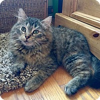 Adopt A Pet :: Muddle - Addison, IL