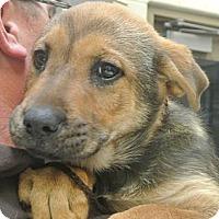 Adopt A Pet :: Grace - white settlment, TX