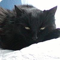 Adopt A Pet :: Rudy (doglike personality) - Sterling Hgts, MI