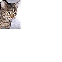 Adopt A Pet :: Mae - El Cajon, CA