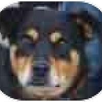 Adopt A Pet :: BUTTERCUP - latrobe, PA