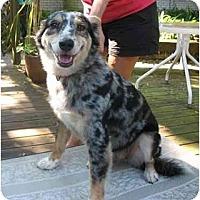 Adopt A Pet :: Brittany - Orlando, FL