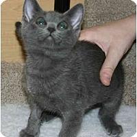 Adopt A Pet :: Fyra - Irvine, CA