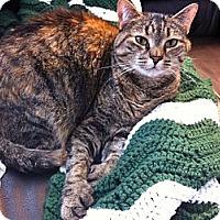 Adopt A Pet :: Delilah - Easley, SC