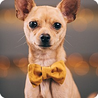 Adopt A Pet :: Spike - Portland, OR