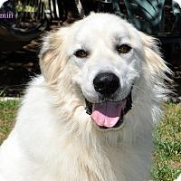 Adopt A Pet :: Charmin - Indian Trail, NC