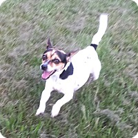 Adopt A Pet :: KALLY - Terra Ceia, FL