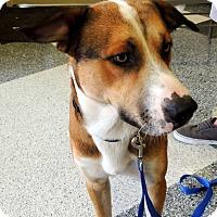 Adopt A Pet :: Whitey - Humble, TX