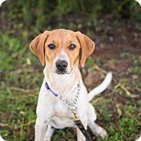 Adopt A Pet :: Hestia - Barnesville, GA