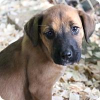 Adopt A Pet :: Jasmine Pup (susan) - Homestead, FL