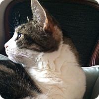 Adopt A Pet :: Iginla - Toronto, ON