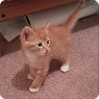 Adopt A Pet :: Willie Nelson - Monterey, VA