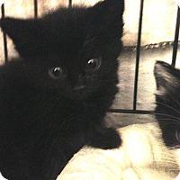 Adopt A Pet :: Houdini - River Edge, NJ