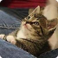 Adopt A Pet :: Meatball - Potomac, MD