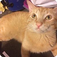 Adopt A Pet :: Mufasa - Corona, CA