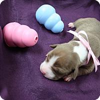 Adopt A Pet :: Sneezy - Tehachapi, CA