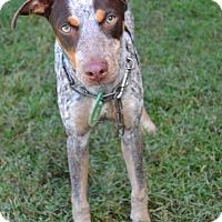 Adopt A Pet :: Cherry - Beaumont, TX