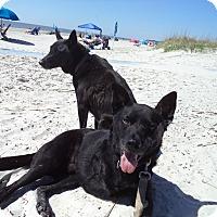 Adopt A Pet :: Abigail - Loudoun County, VA