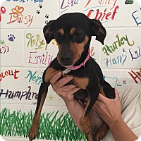 Adopt A Pet :: Penny - Lockhart, TX