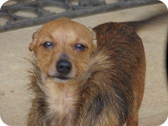 Dachshund Mix Dog for adoption in Marshall, Texas - Trinity