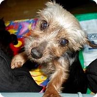 Adopt A Pet :: Angel, now Bonnie - Tonawanda, NY