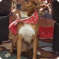 Adopt A Pet :: Elfie - Bucyrus, OH