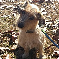 Adopt A Pet :: Houdini - Snow Hill, NC